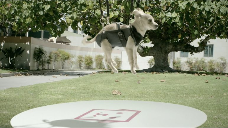 Same Day Pups: Puppy Drone Delivery